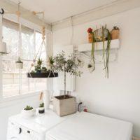 Plantes vertes dans buanderie