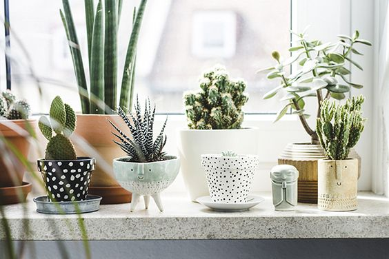 plantes vertes déco rebords fenetres