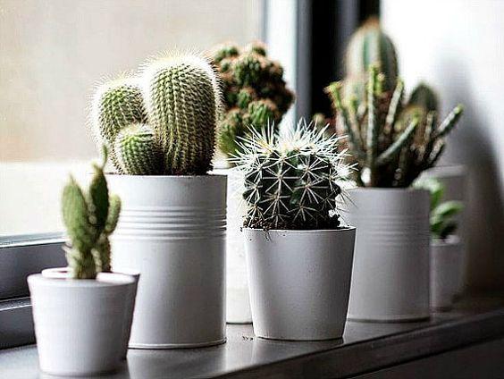 cactus au bord de la fenêtre