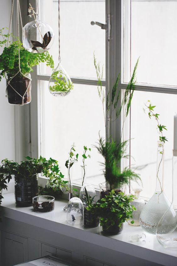 deco fenetre avec des plantes
