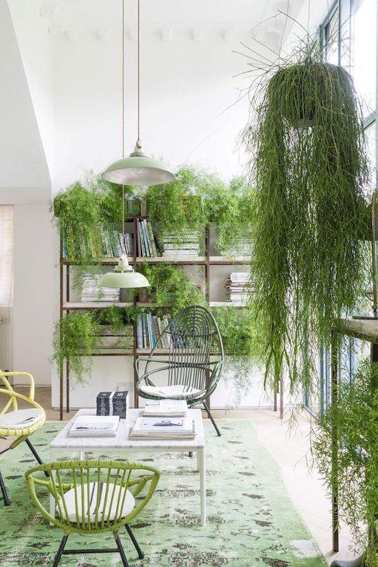 décoration intérieure végétale
