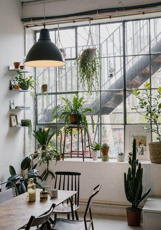 décoration plantes vertes