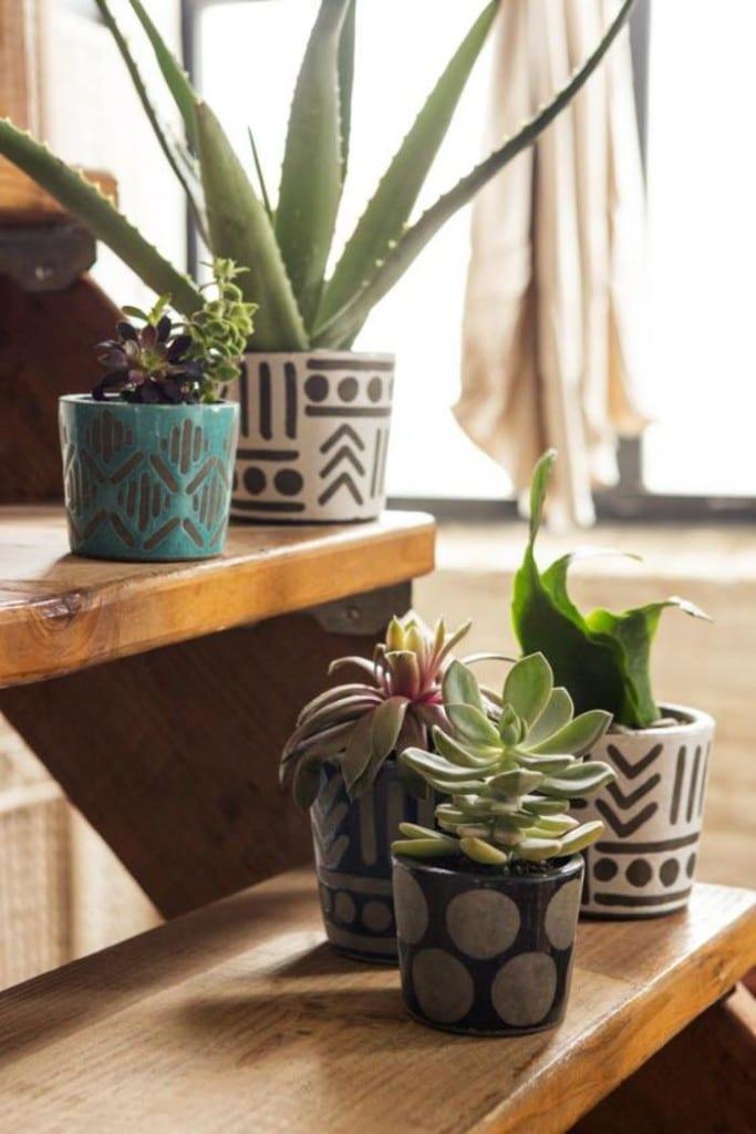 tendances déco tropicale plantes grasses