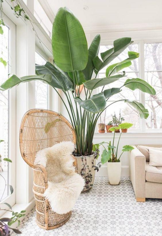 plante intérieure pour décoration tropicale
