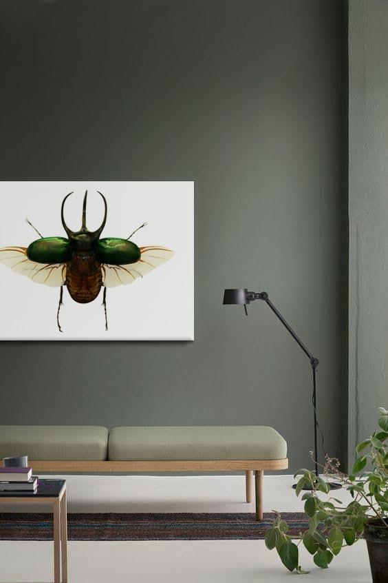 cadre-coleoptere-izoa