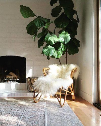une plante pour déco salon cocooning